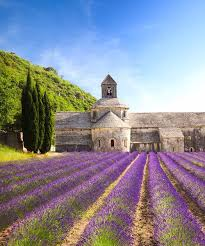 Provence - Lavender Fields